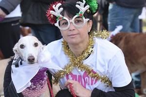 Cientos de madrileños con sus perros vuelven a tomar las calles en la Sanperrestre 2017