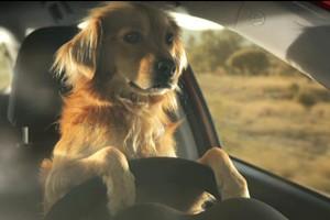 Por primer vez en España, una familia es abandonada por su perro