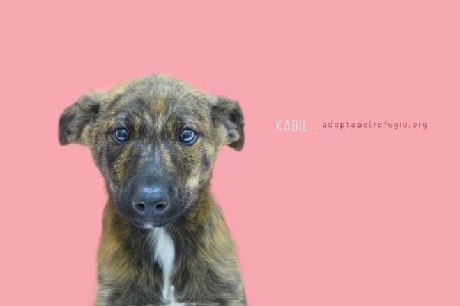 Urgente, adopción 3 cachorros.
