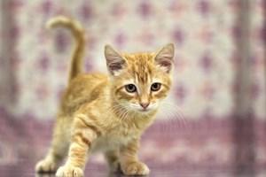 ¿Cuántas vidas tiene un gato?