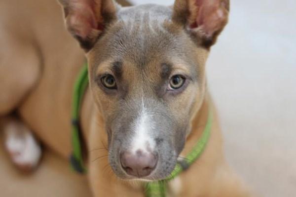 La perrita Bite ha sido adoptada en tan solo cinco días.