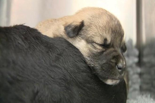 El Refugio se persona como acusación en un nuevo caso de maltrato animal