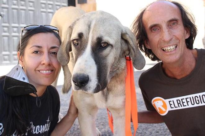 Dos perritas especiales buscan familia.