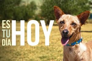 Hoy es el Día más perro del Mundo.