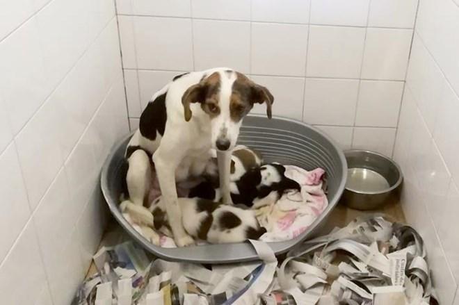 Ayuda urgente para esta familia.