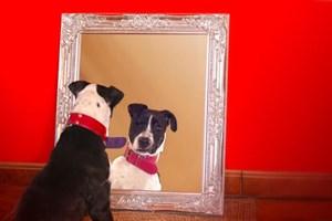Mary Read, la perrita que no se reflejaba en los espejos.
