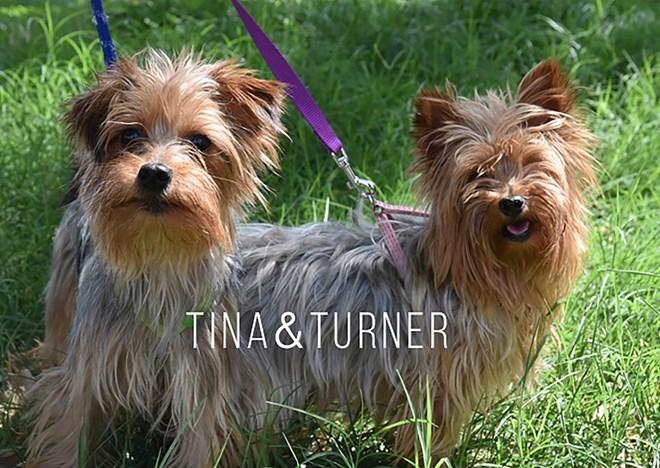 Buscamos familia para estos dos perritos.