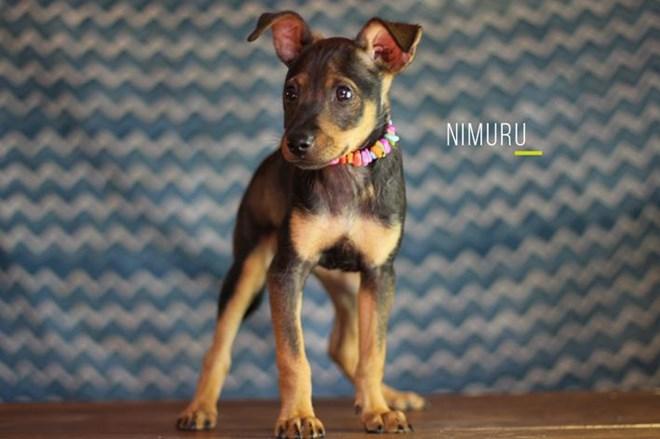 Nimuru & Cocoa: dos enanitas buscan familia.