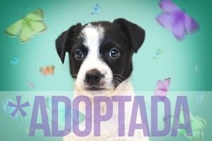 Adoptan a Polpetta, la cachorrita que rescatamos de la basura.