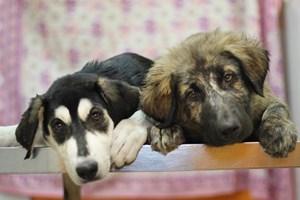 Thelma & Louise han huido juntas del abandono.