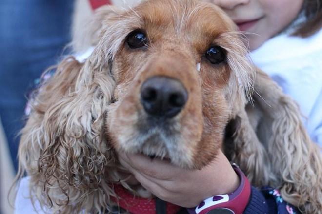 La Sanperrestre pide condenas más duras para el maltrato animal.