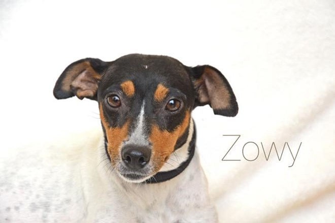 Buscamos familia para Zowy y sus 4 pequeños: la familia que rescataron de las profundidades de la tierra.