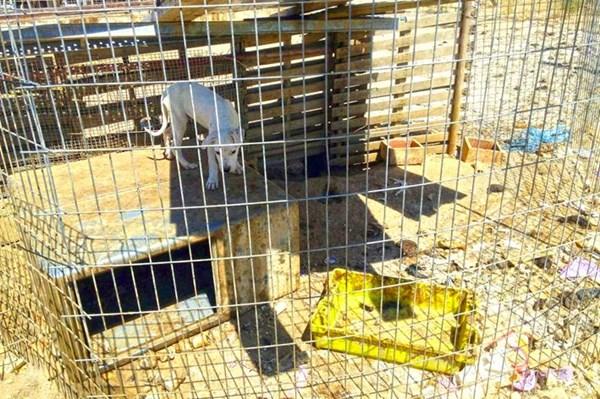 Pedimos 40 años de cárcel para un cazador por cometer presuntamente 55 delitos de maltrato animal.