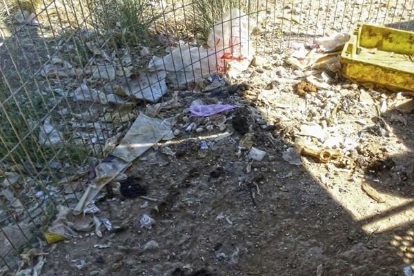 52 perros de caza incautados por la Guardia Civil en Villa del Prado