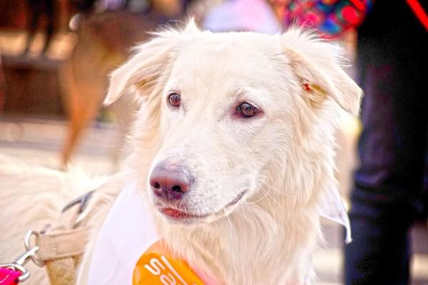 Los perros madrileños dan las campanadas en la Sanperrestre de El Refugio