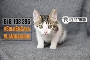 Los gatos de afectados o fallecidos por el Covid-19 también contarán con la protección de El Refugio.