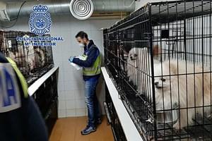 El Refugio será acusación contra dos criaderos ilegales desmantelados en Madrid