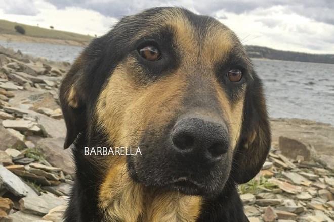 Necesitamos ayuda para Barbarella y sus 9 hijitos.