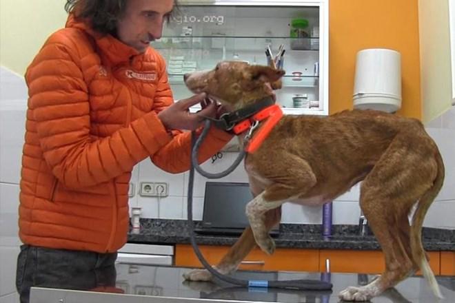 Salvar al perrillo Periquín