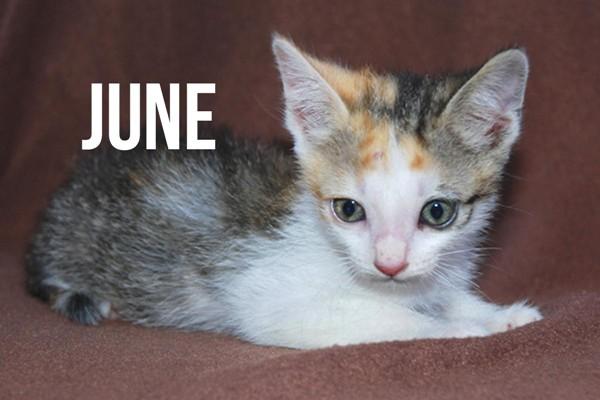 Necesitamos hogar urgente para 4 gatitos huérfanos rescatados de una alcantarilla.