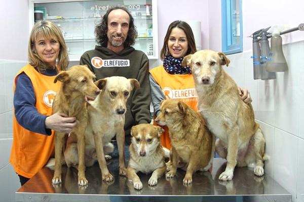 El Refugio rescata a doce perros que vivían con una persona con Síndrome de Noé.