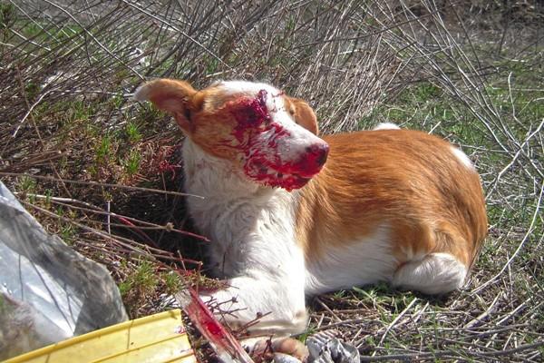 Anciano condenado por un caso de maltrato animal