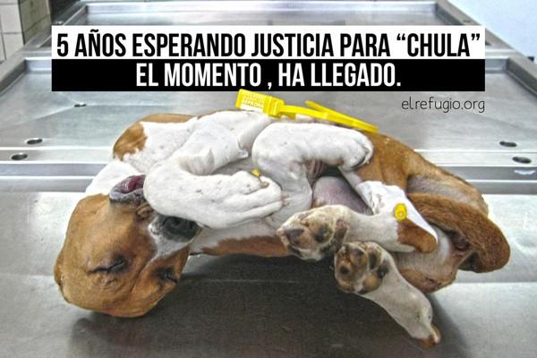 Hoy ha sido juzgado el supuesto responsable de matar a su perra de una patada