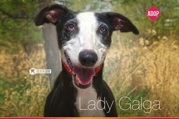 Lady Galga: ¡bienvenida a nuestras vidas!