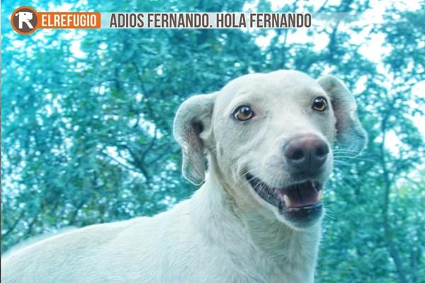 ADIOS FERNANDO, HOLA FERNANDO.