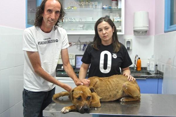 27 de julio, Día Internacional del perro callejero.