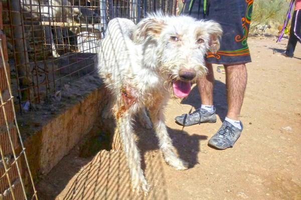 El juez imputa por maltrato animal al cazador de Villa del Prado que tenia 55 perros en terribles condiciones