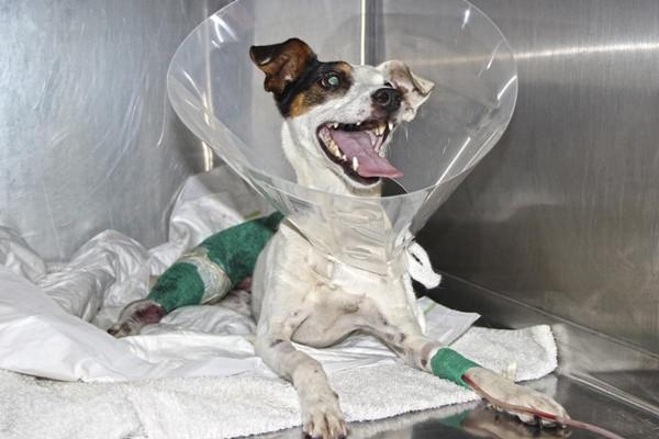 Cazador imputado por disparar supuestamente a un perrito junto a sus dueños.