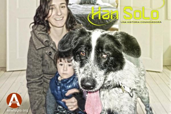 Han Solo, adoptado por una familia que lo tuvo en acogida 3 años atrás