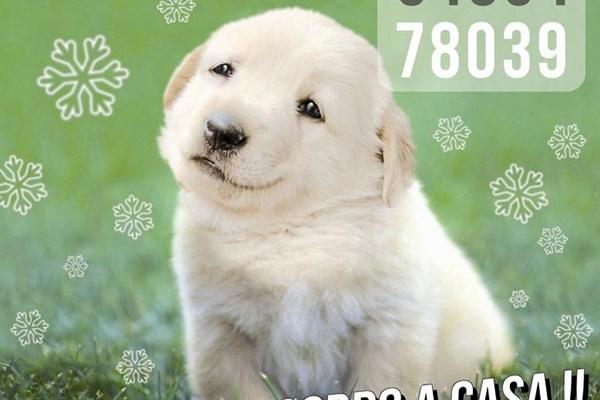 Puntos de venta para comprar la lotería de Navidad de El Refugio