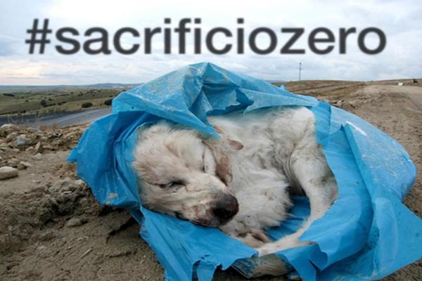 Listado de medidas que es preciso aplicar para conseguir el #sacrificiozero