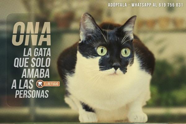 Ona, la gata que solo amaba a las personas