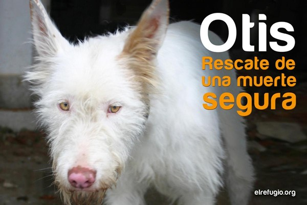 El Refugio rescata a Otis, atrapada en el hueco de un ascensor