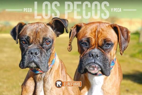 FELICES DE RESCATAR A LOS PECOS: DOS HERMANOS, PECA Y PECO.