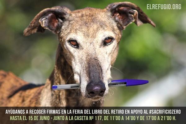 Si quieres proteger a los animales abandonados, ¡¡EL MOMENTO ES AHORA!!