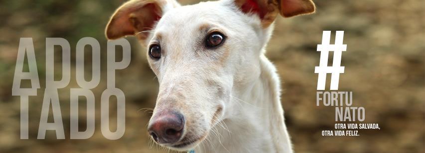 Que te adopten 17 días después de ser rescatado, es tener mucha Fortuna!!