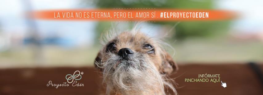 ¿Qué sería de mi perrito si yo fallezco?: nace El Proyecto Edén.