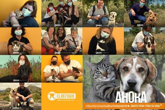Adoptar en El Refugio, ahora es mejor.