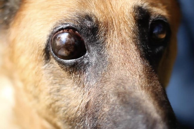 Alan, el perro ciego al que abandonaron a su suerte.