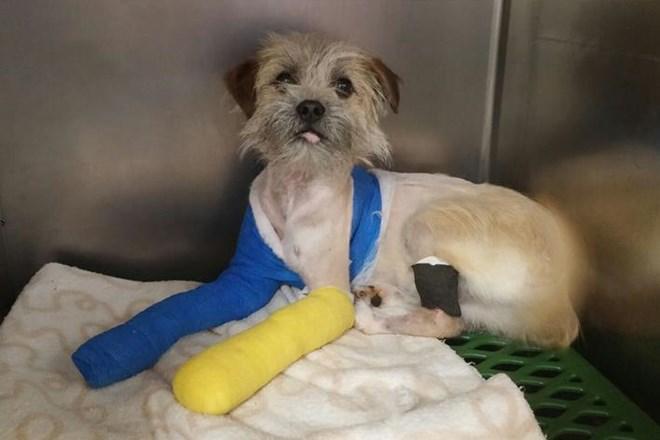 El trabajo de 17 personas durante 2 años, logra salvar a 1 perrito de morir y hoy disfruta de una vida feliz.